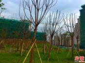 中航城花园实景图