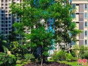 小区园林图