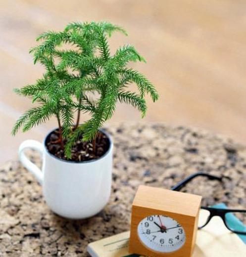 创意小盆栽介绍 巧用室内植物作装饰