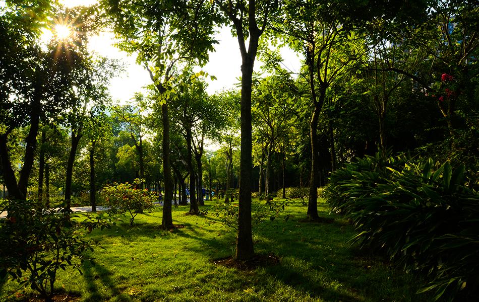 越过小径来到了丛林处,斜阳透过绿叶耀着迷人的星芒。绿地植被享受着日光近乎无限的恩赐。