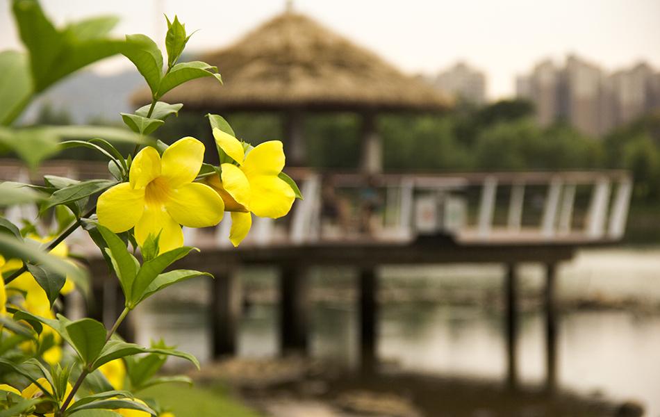 像这样不知名的花,在园区随处可见。它们未必如兰花般绚丽多彩,但他们也能在甘露的滋润下肆意绽放,难道这不正是生命在怒放。