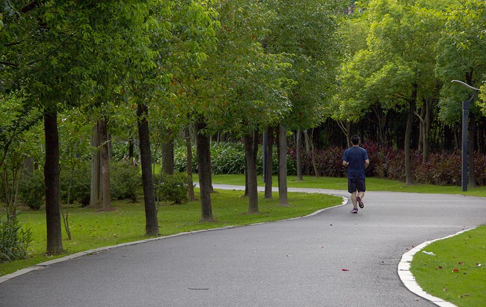 早晨,早起的人儿已经奔跑在金山湖公园郁郁葱葱的小径上。以滨水景观为主的开放式公园已成为附近居民休闲、观赏、游玩、健身的好去处。