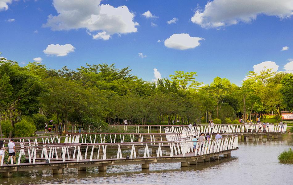 小桥在金山湖湖面上蜿蜒。都说惠州半城山色半城湖。瞧,天空蔚蓝,树木葱郁,风景秀丽的金山湖公园不亚于任何景区。