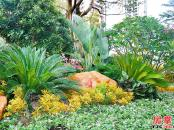 方直星耀国际-园林实景拍摄