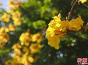 梵高的花园-园林实景拍摄