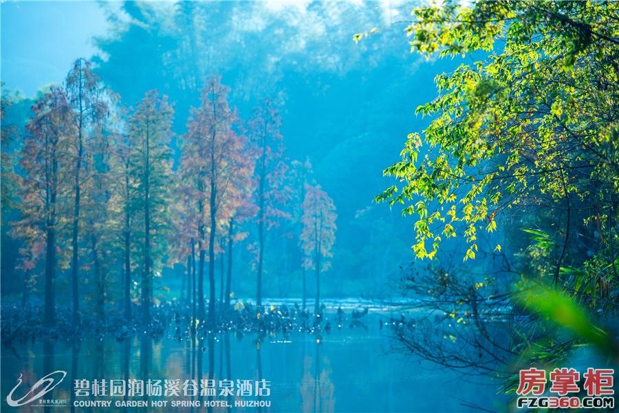 水杉湿地公园
