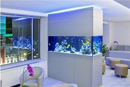 客厅养金鱼的风水?客厅养鱼注意什么?