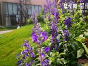 碧桂园星悦园林景观